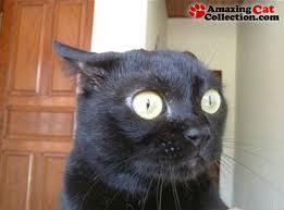 bug eyed cat